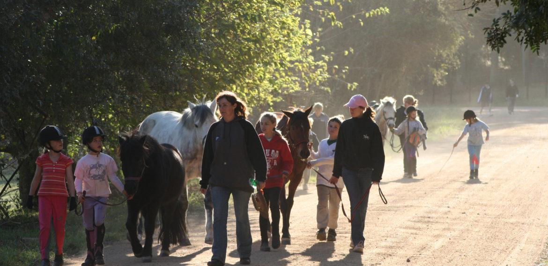 Ridgetop Riding Pony walk